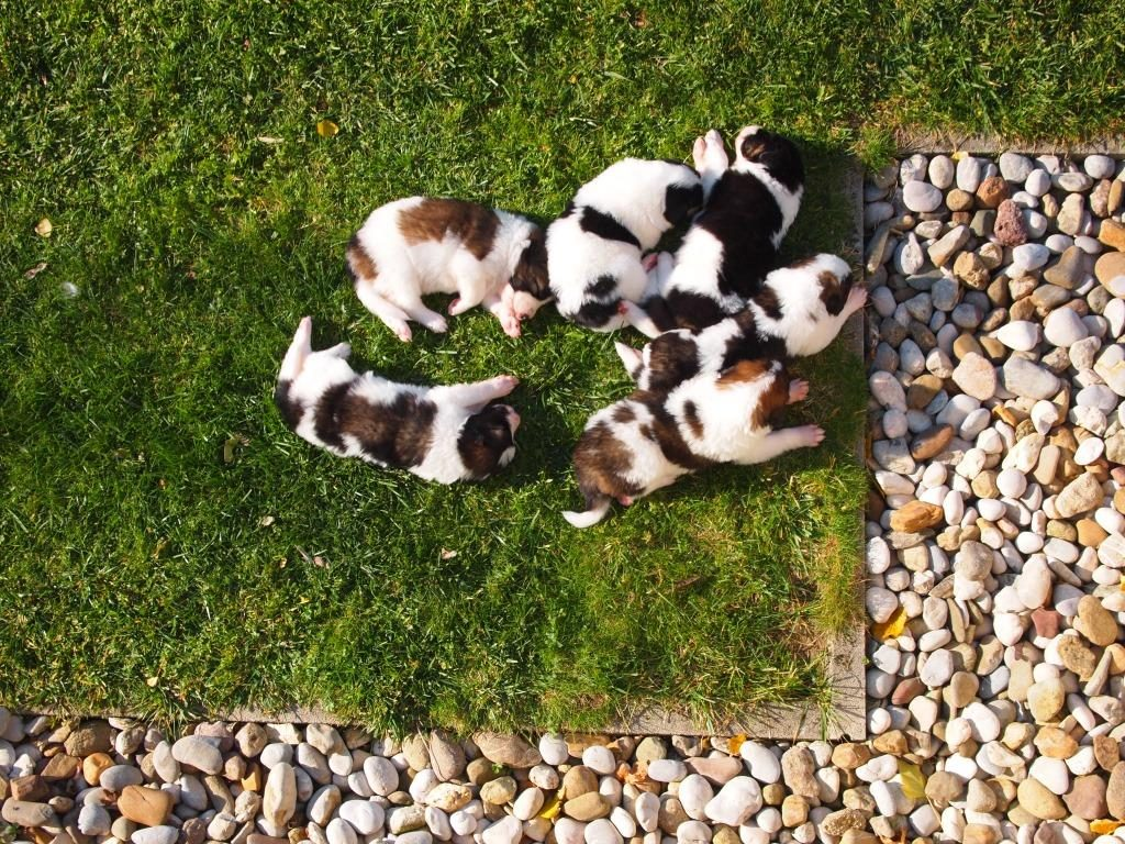 Helicopter view on puppies