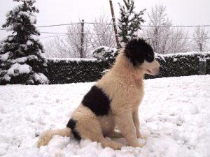 Milky-pozira na snijegu