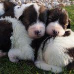 Group puppy sleeping