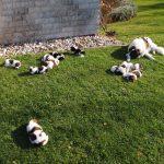 Garden puppy party