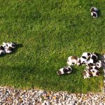Puppies on grass