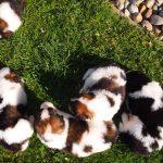 Puppy sunbathing