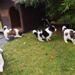 vrtna kućica za pse