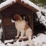 Melon-dog-hose-in-snow