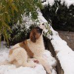 Melon-in-snow