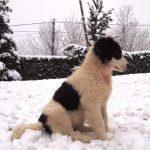 Milky-posing-in-snow