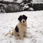 Pretty Milky in snow