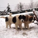 Milky and Modox in snow