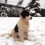Milky-posing-while-snowing