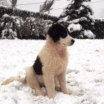 Milky-i sniježić
