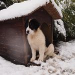 Milky-snow-and-dog-house