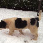 Milky-walking-in-snow