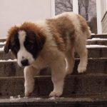 Modox-se spušta niz stepenice