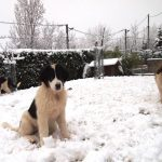 Myra-Milky-and-Modox in snow