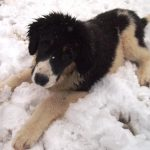 Myra-in-snow
