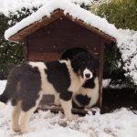 Myra-snow-and-dog-house