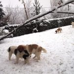 Puppies-playing-in-snow