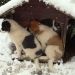 Puppys-and-dog-house-in-snow